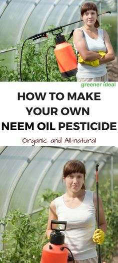 Learn How to make your own organic  neem oil garden pesticide and get rid of aphids and other garden pests.