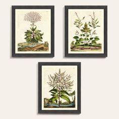 Garden Herbs Art x - Ballard Designs Canvas Art Prints, Framed Art Prints, Herb Art, Mirror Art, Jute Rug, Ballard Designs, Botanical Art, Herb Garden, Hand Coloring