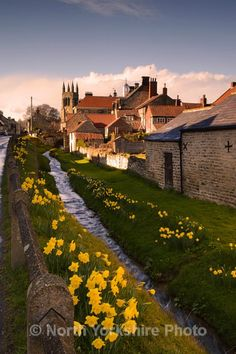 Springtime daffodils - Helmsley, North Yorkshire, England (by Stephen Scott)