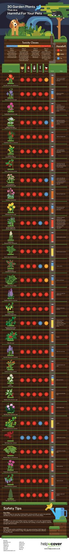 30 Garden Plants That Are Harmful for Pets. Infographic about toxic plants in the garden.