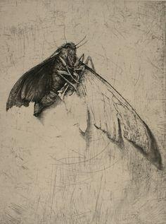 Moth-cellany-5