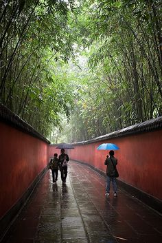 Temple of Marquis Wu (Wuhou Temple), Chengdu, China