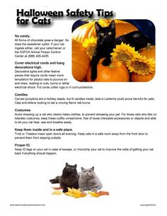 Halloween safety tips!  Animal Hospital Champions NW, Spring TX