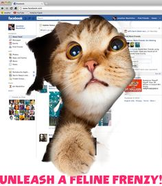 Click to see cats take over any webpage with KittyCat Hijack. Join the meow mayhem.