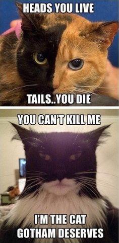 I'm the cat Gotham deserves…