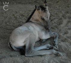 beautiful new baby boy grulla.. one of my favs..