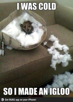 I was cold so I made an igloo. This is what my dog did to my couch one time!