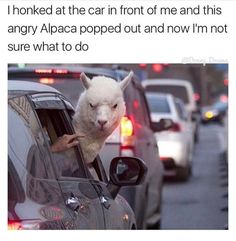 Pictures with Funny Captions Memes that will Make You Laugh 19 Funny Cute, Funny Posts, Funny Stuff, Funny Things, Memes Humor, Funny Memes, Jokes, Funny Captions, Hilarious Stuff