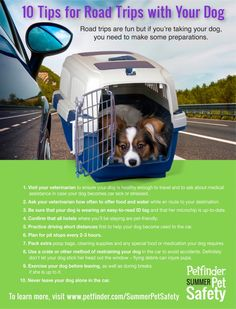 10 Tips for Road Trips with Your Dog - Petfinder