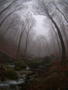 Fog within woodland wonders.