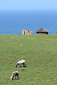 Xhosa, Countries Of The World, Marine Life, Country Life, Cattle, Middle East, Cry, South Africa, Islands
