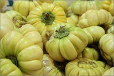 Aubergine sauvage ou aubergine amer ou diakhatou