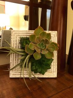 Vertical Succulent Frame by PottedSucculents on Etsy