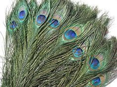 (24) PEACOCK EYES STEMS, Fly tying, Crafts, Home Decorations, Headdresses, Fans
