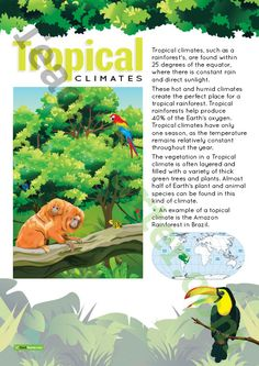 Teaching Resource: A poster to display in the classroom when learning about tropical climates.