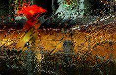 photo: Красный зонтик | photographer: Валерий Бредюк | WWW.PHOTODOM.COM