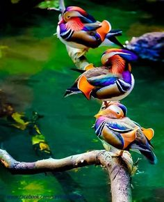 colorful birds of asia