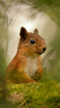 SWEET SQUIRREL!