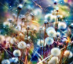 Dandelion - Fields Wallpaper ID 1520714 - Desktop Nexus Nature