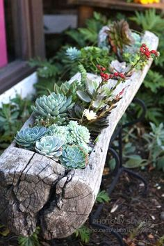 decorare un tronco