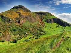 Holyrood Park is always a lovely place for a wander, and at this time of year there are lots of plants blooming and animals to spot!