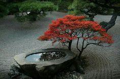 georgeous water basin with azalea?