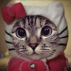 adorable cat dressed as Hello Kitty