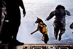 A U.S. Army soldier and Pronto, his Special Forces military working dog, jump off the ramp of a CH-47 Chinook helicopter during water training over the Gulf of Mexico as part of Emerald Warrior, March 1, 2011.