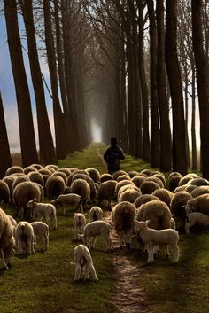 Don't you feel we are stumble through life like sheep sometimes?