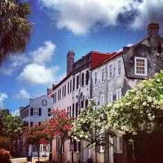 Crepe myrtles in #Charleston mark the summer season