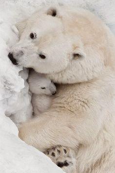 Polar bear love ~ Dreamy Nature