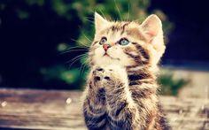 Download Gambar Wallpaper Kucing Lucu - Zain Elhasany