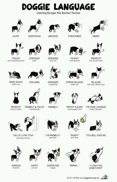Doggies and Style on Pinterest