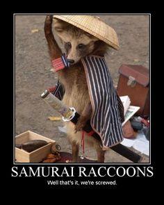 samurai raccoons