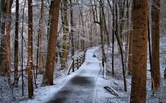 Path in the winter forest wallpaper