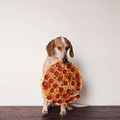 Dog eats pizza, does not share.