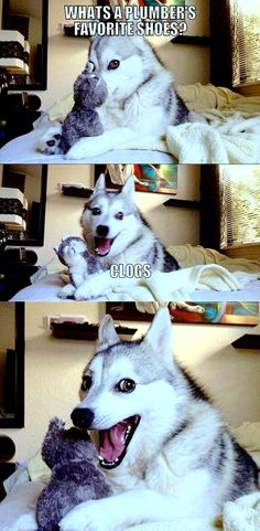 So punny. - Jokes - Funny memes - - So punny. I love memes with this dog! This dog is my spirit animal The post So punny. appeared first on Gag Dad. Memes Humor, Puns Jokes, Corny Jokes, Bad Dad Jokes, Stupid Jokes, Jokes Kids, Bad But Funny Jokes, Dry Humor Jokes, Cat Memes