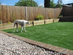 Artificial Grass for Dogs. Another gorgeous lurcher, another artificial lawn!