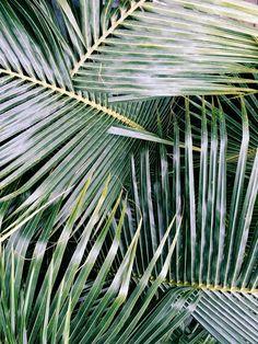 Palms    VSCO Grid   naomifontaine