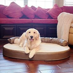 Shop for Integrity Bedding Orthopedic Memory Foam Leatherette Joint Relief Bolster Dog Pet Bed. Get free delivery On EVERYTHING* Overstock - Your Online Dog Supplies Store! Bolster Dog Bed, Pet Dogs, Pets, Cool Dog Beds, Large Dogs, Pet Supplies, Memory Foam, Integrity, Comfy