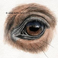 Draw a Horse Eye in colored pencil