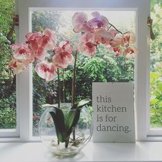 Kitchen disco 🍾 #bankholidayweekend #keepdancing #orchid #flower