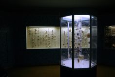 Shells from the Albany Museum, Grahamstown, South Africa.