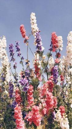 Amazing Flowers, Pretty Flowers, Wild Flowers, Purple Flowers, Flowers Nature, Flowers Garden, Spring Flowers, Pink Purple, Exotic Flowers