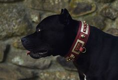 Dog Argentino, Black Pitbull, Black Wallpaper, Doberman, Rottweiler, Prague, Dog Training, Cute Dogs, Pitbulls