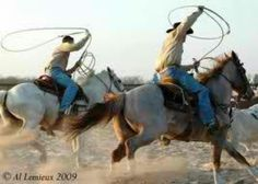 Roping the cattle