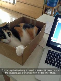 The cat trap worked...                                                                                                                                                                                 More