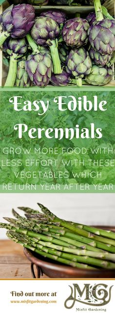 Want to #grow more food with less effort_ Perennial vegetables are great for busy gardeners! Click to learn more or pin it for later