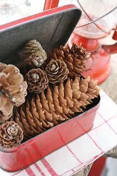 Pine cone collecting