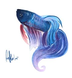 betta fish drawing - looks exactly the same as rainstorm. fins, beard colour and all